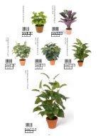 Plants & Pots 2015 old - Page 4