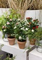 Plants & Pots 2015 old - Page 5