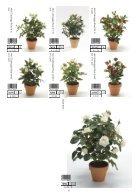 Plants & Pots 2015 old - Page 6