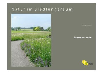 Ansäen einer Blumenwiese - landschaftcham.ch
