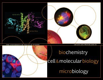 program brochure - Institute for Cellular and Molecular Biology - The ...