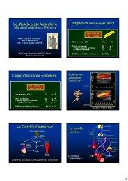 Le Muscle Lisse Vasculaire - Master Sciences et Technologie