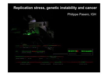 Replication stress, genetic instability and cancer - Master Sciences ...
