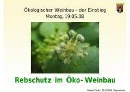 Rebschutz im Öko-Weinbau