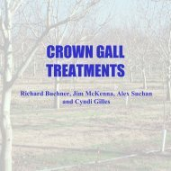 Crown Gall Treatments 2007