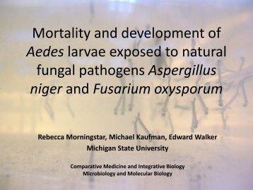 8 Rebecca Morningstar - Michigan Mosquito Control Association