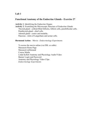 Lab 1 Functional Anatomy of the Endocrine Glands - Exercise 27