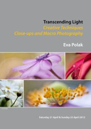 Transcending Light Creative Techniques Close-ups and Macro ...