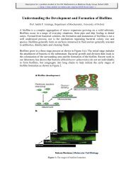 Modelling the development and formation of biofilms