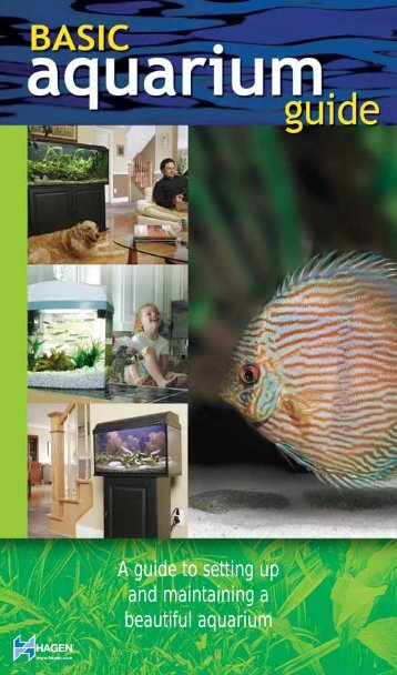 A guide to setting up and maintaining a beautiful aquarium