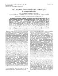 DNA Length Is a Critical Parameter for Eukaryotic Transcription In Vivo