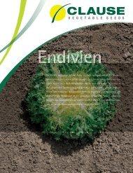 Katalog Endivien 2014-2015 - Nickerson-Zwaan