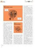 Ictus. El azote de la mujer - Ibanezyplaza.com - Page 7