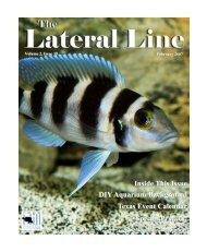 Lateral Line February 2007.pub - Hill Country Cichlid Club