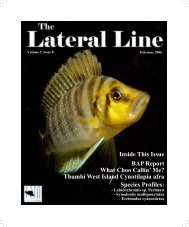 Lateral Line February 2006.pub - Hill Country Cichlid Club