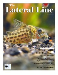 Lateral Line March 2005.pub - Hill Country Cichlid Club
