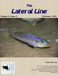 February 2011 Lateral Line - Hill Country Cichlid Club