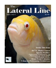 Lateral Line July 2006.pub - Hill Country Cichlid Club