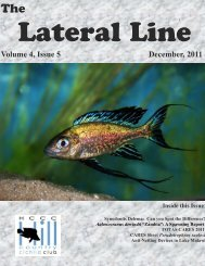 Lateral Line December 2011 - Hill Country Cichlid Club