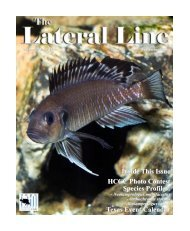 Lateral Line September 2006.pub - Hill Country Cichlid Club