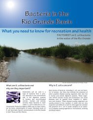 Bacteria in the Rio Grande Basin