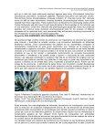 Las anémonas marinas como fuente para la obtención de ... - Page 2