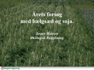 Årets forsøg med bælgsæd og soja. - Økologisk Rådgivning