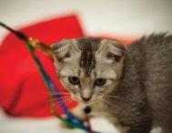 Cat Photobook