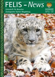 Felis News - Zoologischer Garten Magdeburg