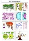BIOLOGY - microscopia.info - Page 4