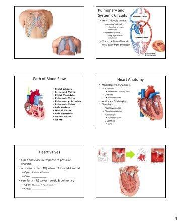 Trifecta - Cardiovascular