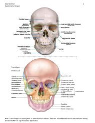 Axial Skeleton 1 Supplemental images Note: These images are ...