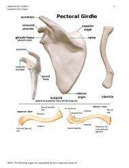 Appendicular skeleton 1 Supplemental images NOTE: The following ...