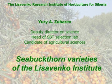 SBT varieties, breed by Lisavenko Institute
