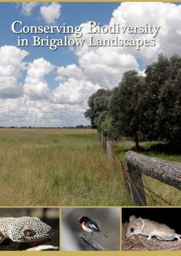 Conserving Biodiversity in Brigalow Regrowth - School of ...