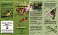 Butterfly - Southwest Georgia Master Gardeners