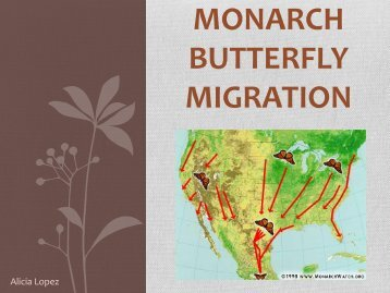 Monarch Butterfly Migration PowerPoint - Courseweb.unt.edu