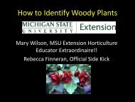 How to Identify Woody Plants