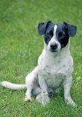 Heimtierbedarf 2014/15 Pet Supply 2014/15 - Page 6