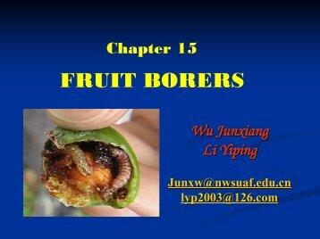 FRUIT BORERS