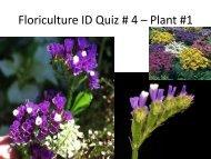 Floriculture ID Quiz # 4 – Plant #1