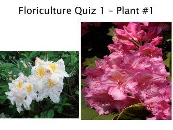Floriculture Quiz 1 – Plant #1