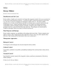 Millet Downy Mildew