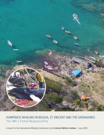 Humpback WHaling in bequia, St Vincent and tHe grenadineS