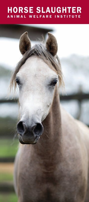 HORSE SLAUGHTER - Animal Welfare Institute