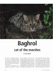Baghrol - wild-cat.org