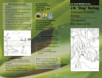 Mangrove Brochure