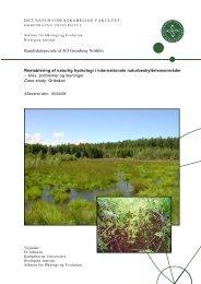 Reetablering af naturlig hydrologi i internationale ... - Naturstyrelsen