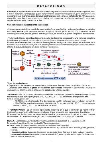 C A T A B O L I S M O - Maristasgranada.net