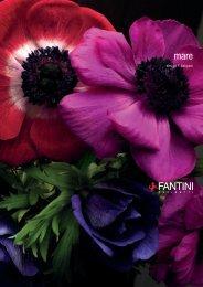 Acquatonica brochure 04/7 - Studio Maison